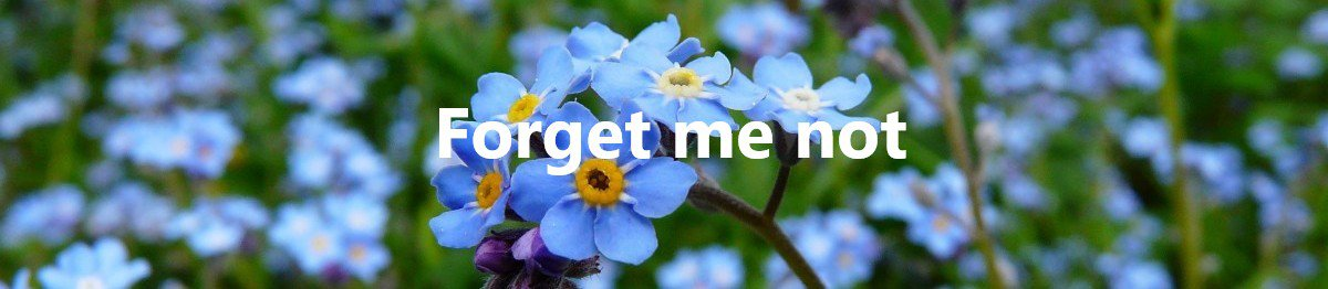 Forget me not banner.jpg