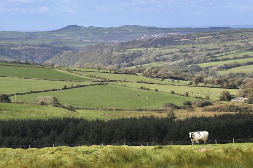 Preseli Landscape