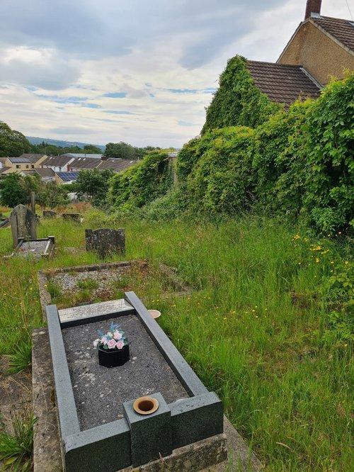 Bro Lliedi churchyard [wildflowers]